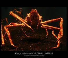 Japanese sea alien -4- by Lou-NihonWa