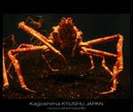 Japanese sea alien -4-