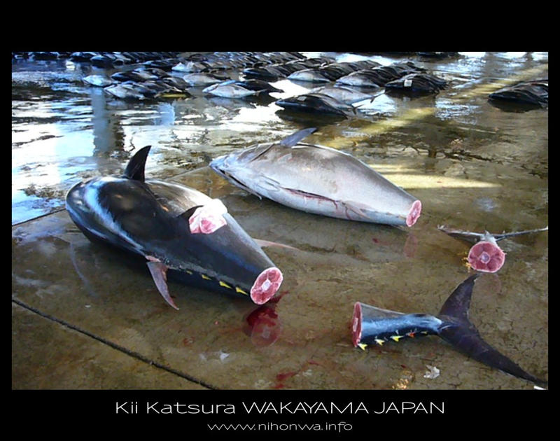 The fish market of Kii Katsura by Lou-NihonWa