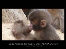 Japanese monkeys -1- by Lou-NihonWa