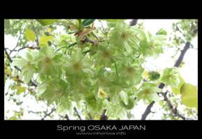 Sakura -2- by Lou-NihonWa