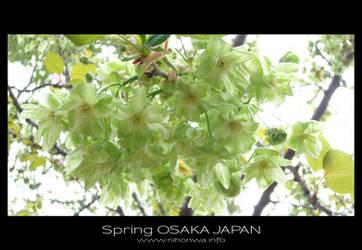Sakura -2-
