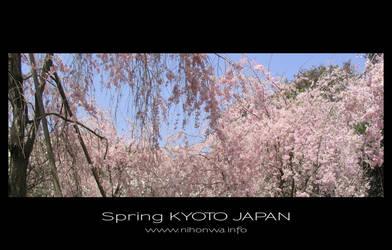 Sakura -5-