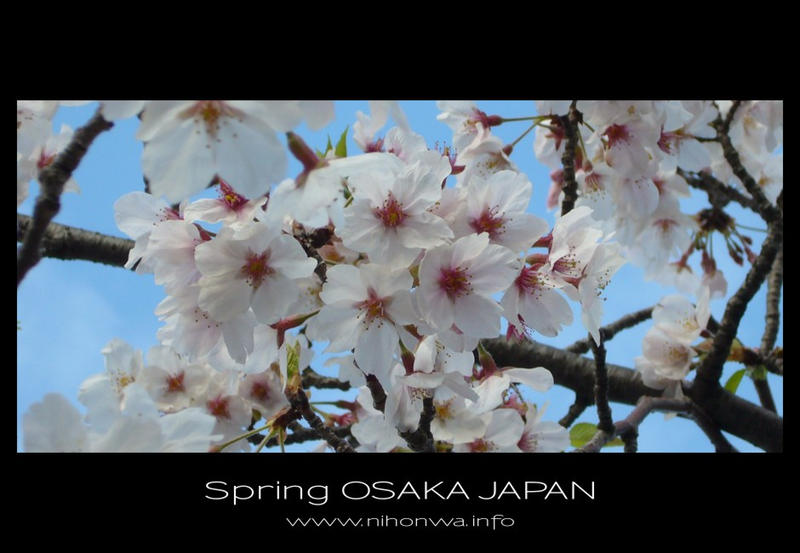 Sakura -6- by Lou-NihonWa