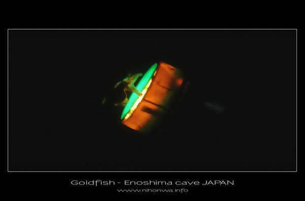Goldfish of Enoshima cave by Lou-NihonWa