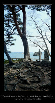 Tree roots on Oshima island