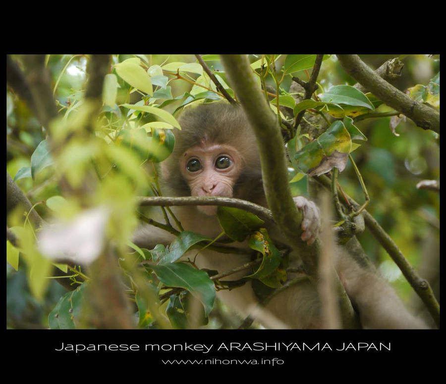 japanese monkey by Lou-NihonWa