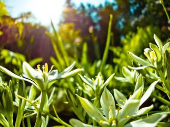 Floral strivings by tienod