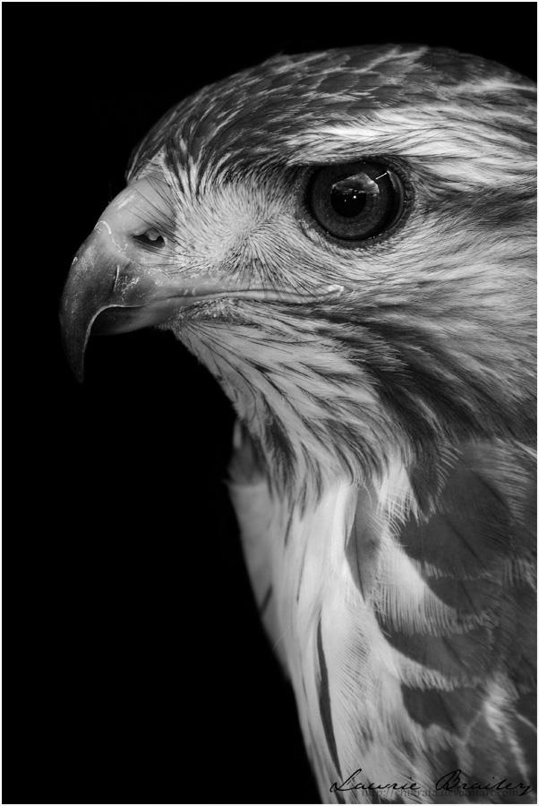 Predator by Chikrata