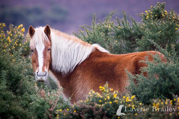 Wild Stallion by Chikrata