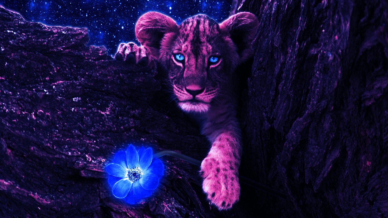Lion Pictures Purple Wallpaper Image Wallpaper Collections