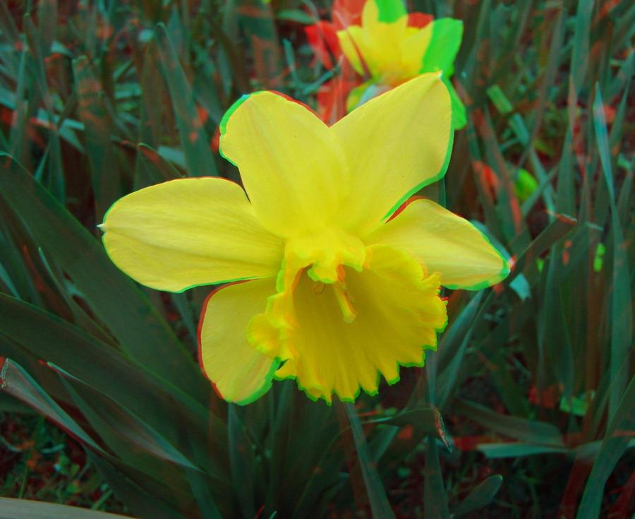 Flower-Narcissa by relu65