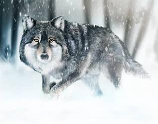 Wolf by AaronRutten