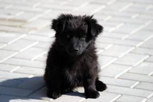 black dog. by ksienrzniczka