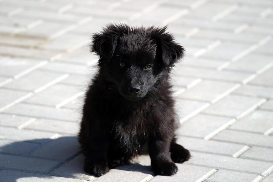 Black Fluffy Dog Related Keywords & Suggestions - Black ...