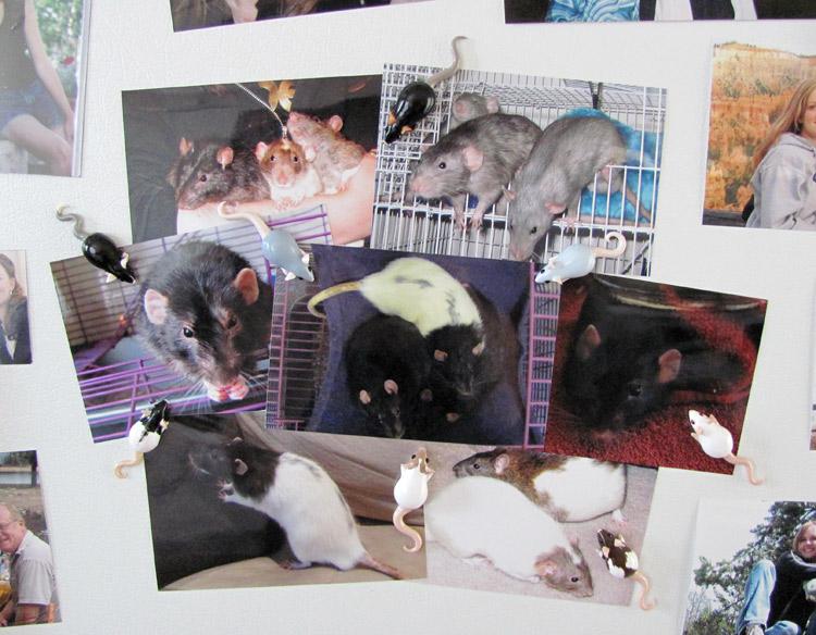 sacha le rat minecraft france. Black Bedroom Furniture Sets. Home Design Ideas