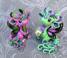 Baby Butterfly Dragons
