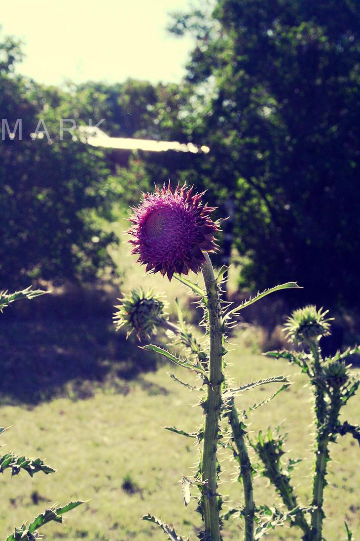 beauty 00 by MarkModifacation