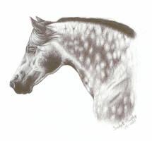 Dapple Horse by mediocrelife