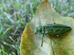 A Bug's Leaf