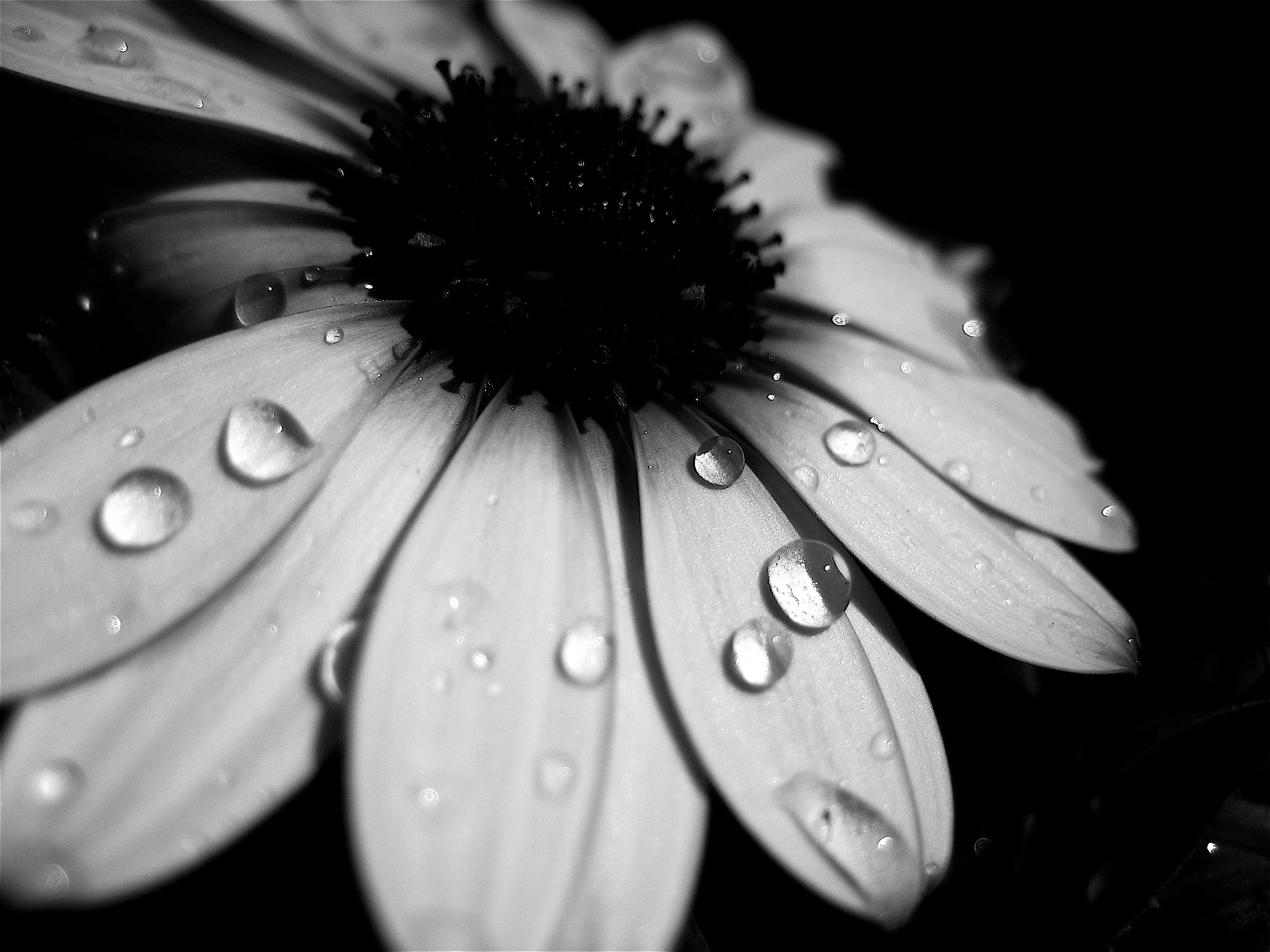 1000+ images about Black and white photography/flowers on ...