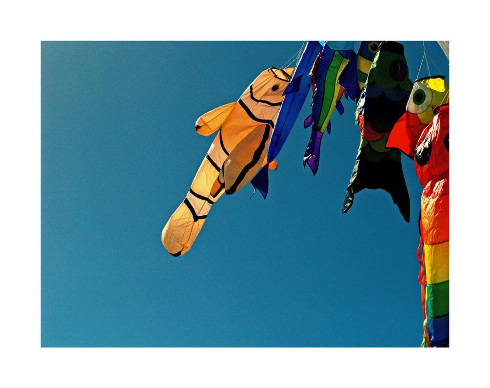kites by damo3sp