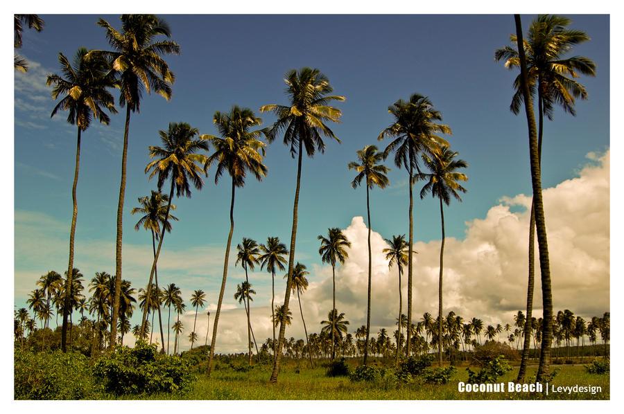 Seberapa tinggi pohon kelapa bisa tumbuh aku suka for Arid garden design 7 little words