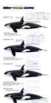 -Killer whale forms- UPDATED