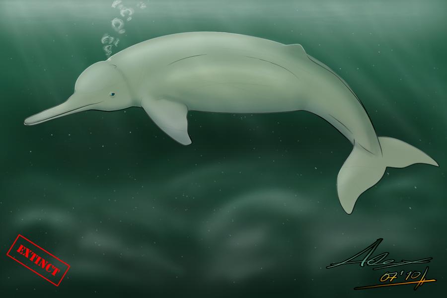 Baiji - BaijiBaby Baiji Dolphin