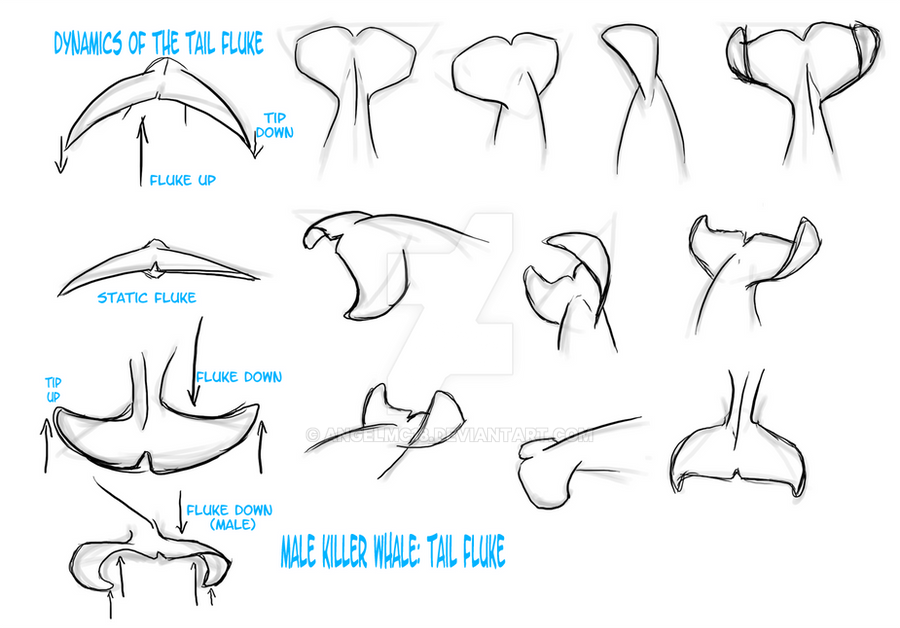 Study Orca Males Tail Fluke By Angelmc18 On Deviantart