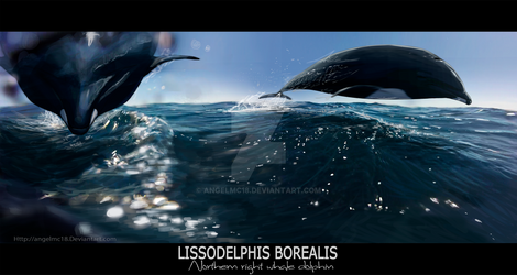 Lissodelphis Borealis