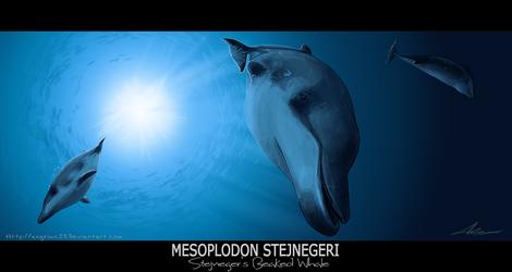 Stejnegers beaked whale