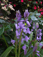 Purple flowers by thuvia