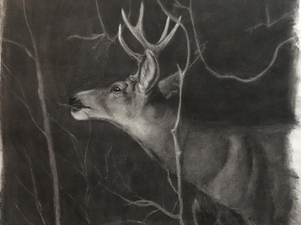 Subtractive buck sketch by thuvia