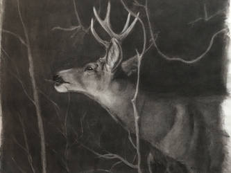 Subtractive buck sketch