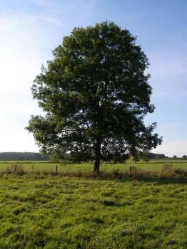 Ash Tree - geograph.org.uk - 590710