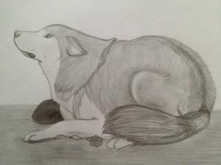 Wolf or Dog. by Ifritids
