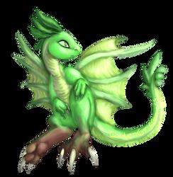 Lime Dergan