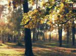 Osennij leso-park