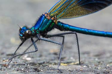 Dragonfly by Malgorzata-Skibinska