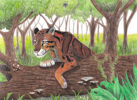 Clouded Leopard by ChevreLune
