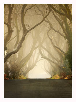 The Dark Hedges 2011