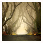 The Dark Hedges ..Misty by Klarens-photography