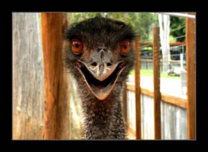 EMUUU