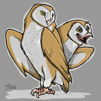 Barn Owls by mct421