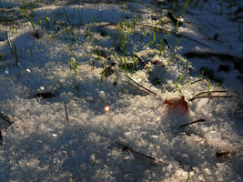 Winter Magic by DatenTanzBaer