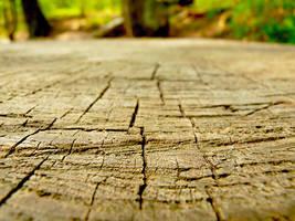 Woodland by DatenTanzBaer