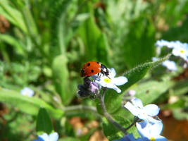 Just a Lady Bug by DatenTanzBaer