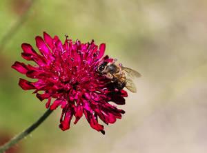 Honeywork in Progress