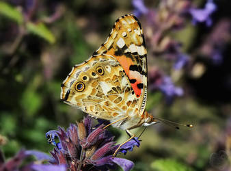 A Butterfly Meal by DatenTanzBaer